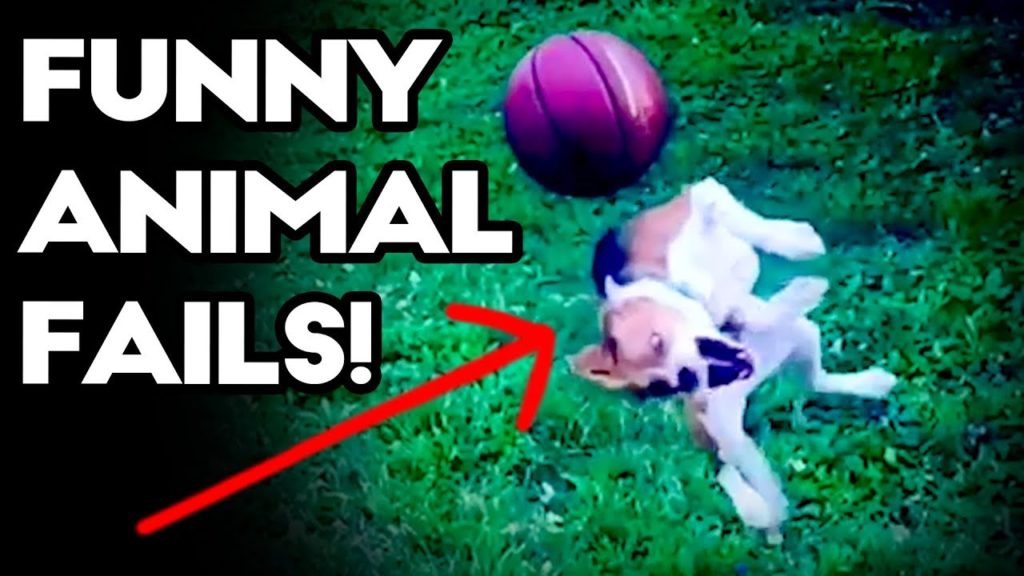 FUNNY ANIMAL FAILS!  Funny Fail Compilation January 2018 💥😂 CUTE FUNNY DOGS CATS AND PETS